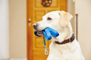 Happy Tails Our Services