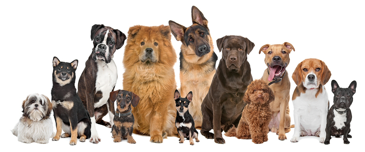 Happy Tails Dog Walkers